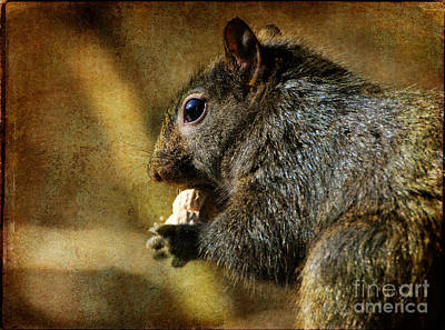 Photograph - Tasty Snack by Lois Bryan