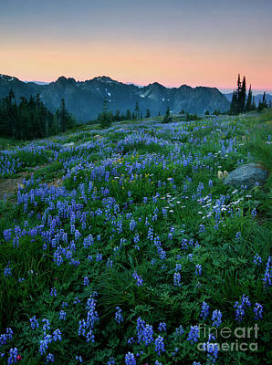 Photograph - Tatoosh Dawn Glow by Mike Dawson