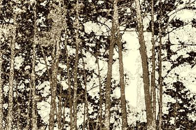 Photograph - Taupe Trees by Ellen Barron O'Reilly
