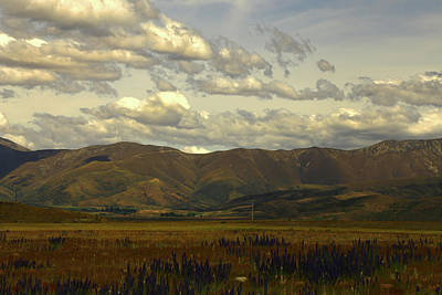 Photograph - Tawny Mountains And Purple Vipers Bugloss At Omarama by Nareeta Martin