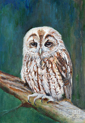 Painting - Tawny Owl by Veronica Rickard