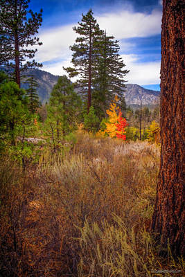 Photograph - Taylor Creek Fall Lake Tahoe by LeeAnn McLaneGoetz McLaneGoetzStudioLLCcom