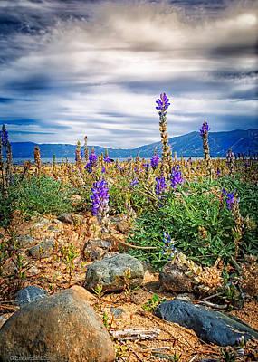 Photograph - Taylor Creek Lake Tahoe Beach by LeeAnn McLaneGoetz McLaneGoetzStudioLLCcom