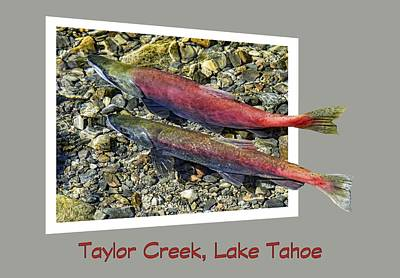 Photograph - Taylor Creek, Lake Tahoe by David Lawson