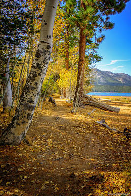 Photograph - Taylor Creek Trails Lake Tahoe by LeeAnn McLaneGoetz McLaneGoetzStudioLLCcom