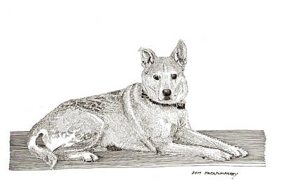 Drawing - TAZ by Jack Pumphrey