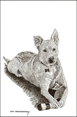 Drawing - Taz  Rescue Pound Dog by Jack Pumphrey
