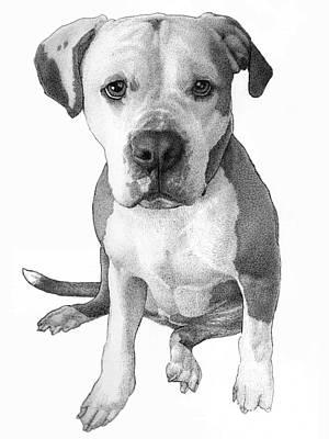 Puppy Drawing - T-bone by Lorraine Zaloom