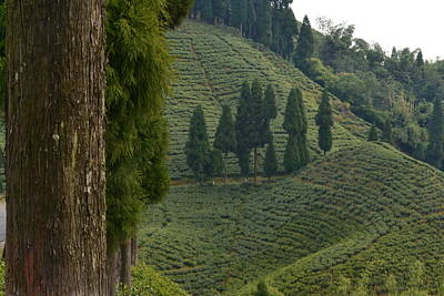 Photograph - Tea Garden In Darjeeling by Atul Daimari