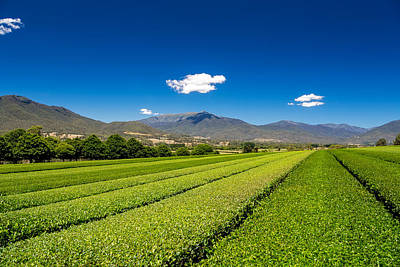 Photograph - Tea In The Valley by Mark Lucey