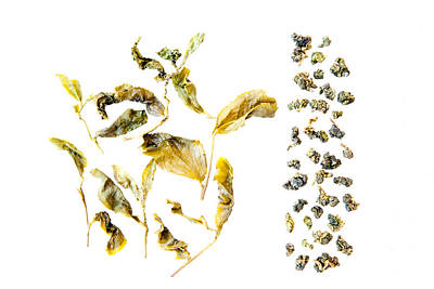 Photograph - Tea Leaves Study No. 01 by Pictorial Decor