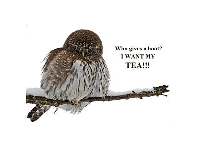 Pygmy Owl Wall Art - Photograph - Tea Owl by Whispering Peaks Photography