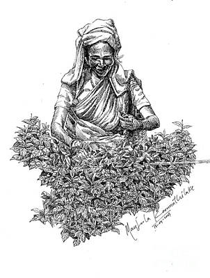 Pen And Ink Drawings For Sale Painting -  Tea Picker by Manjula Karunathilaka