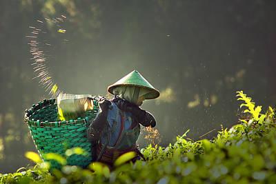 Picker Photograph - Tea Pickers by Muhammad Raju