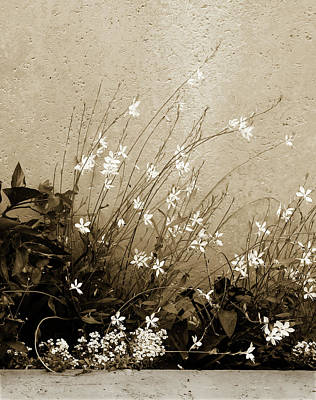Photograph - Tea Tinted Flower Box by Marilyn Hunt