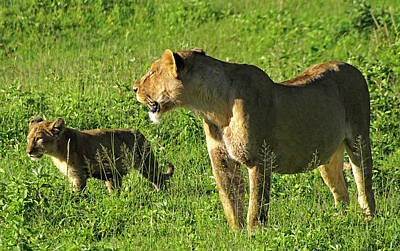 Photograph - Teaching Cub To Hunt by Dennis Cox WorldViews