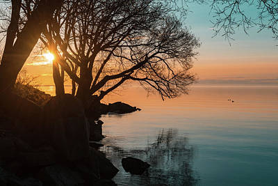 Photograph - Teal And Orange Morning Tranquility With Rocks And Willows by Georgia Mizuleva