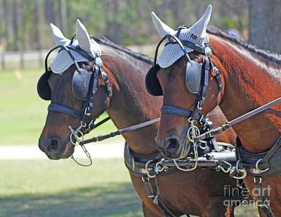Photograph - Team Of Chestnut Horses by Dodie Ulery