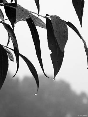 Photograph - Tears by Lauren Radke