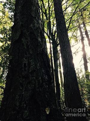 Photograph - Tears Of A Tree by LeLa Becker