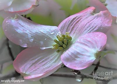 Photograph - Tears On The Dogwood by Tami Quigley