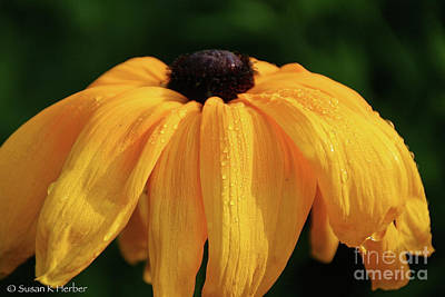 Photograph - Teary Eyed by Susan Herber