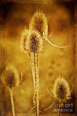 Seed Digital Art - Teasel Group by John Edwards
