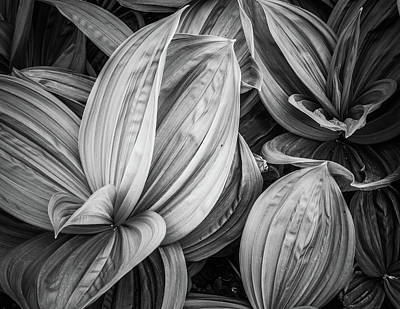 Photograph - Techno Hosta by Kathryn Bell