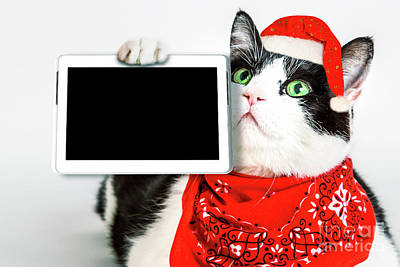 Photograph - Technology Christmas Cat by Benny Marty