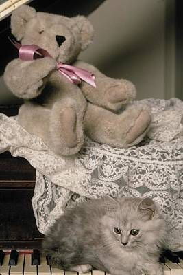 Photograph - Teddy Bear And Ccat by Mary J Tait