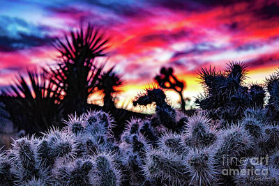 Teddy Bear Cholla Art Print