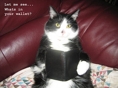 Teddy The Ninja Cat Wants To Know Whats In Your Wallet  Art Print by Reb Frost