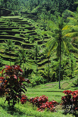 Tegalalang, Bali Art Print by William Waterfall - Printscapes