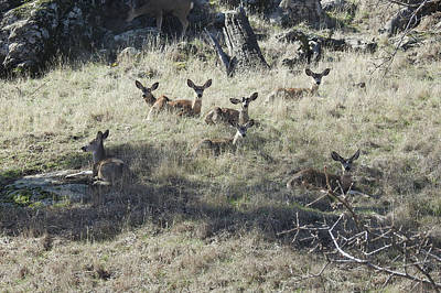 Photograph - Tehachapi Mountain Muleys by Sandra O'Toole