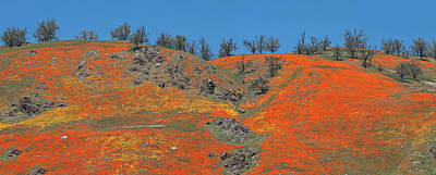 Photograph - Tejon Pass Poppy Panorama by Lynn Bauer
