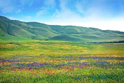Photograph - Tejon Ranch Wildflowers by Lynn Bauer
