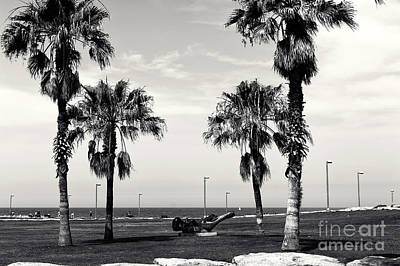 Photograph - Tel Aviv Palm Trees by John Rizzuto
