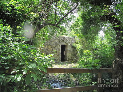 Photograph - Tel Dan Upper Spring  Water Mill by Donna L Munro