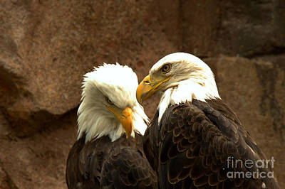 Photograph - Telling Eagle Secrets by Adam Jewell