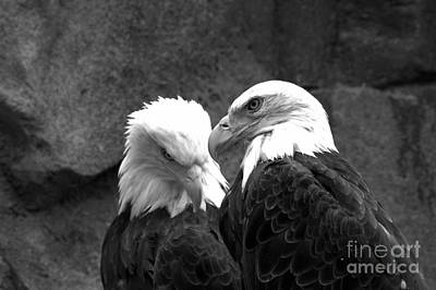 Photograph - Telling Eagle Secrets Black And White by Adam Jewell