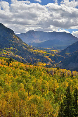 Photograph - Telluride Aspens by Ray Mathis
