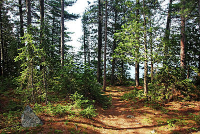 Photograph - Temagami Island Campsite by Debbie Oppermann