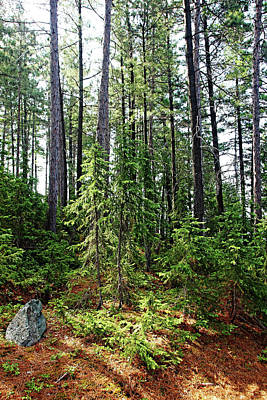 Photograph - Temagami Island Forest by Debbie Oppermann