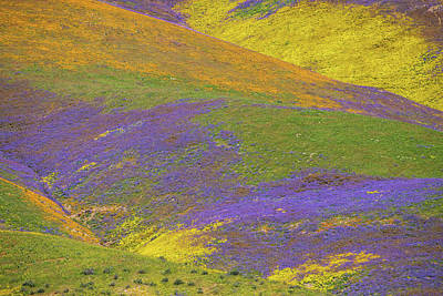 Photograph - Temblor Mountains Superbloom 2017 Landscape Detail by Lynn Bauer