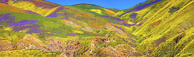 Photograph - Temblor Range Superbloom Panorama 2017 by Lynn Bauer