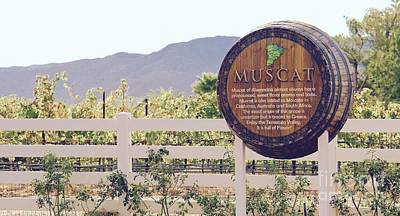 Photograph - Temecula Muscat by Suzanne Oesterling