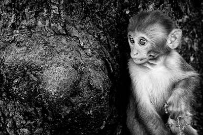 Photograph - Temple Monkey by James David Phenicie