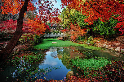 Photograph - Temple Pond In Autumn by Roy Cruz