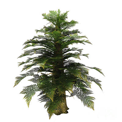 Tree Ferns Digital Art - Tempskya Tree by Corey Ford