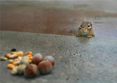 Chipmunks Wall Art - Photograph - Temptation by Lori Deiter